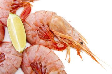 marisco fresco apetitoso en fondo blanco
