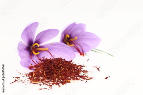 Fotobehang Krokus Dried saffron spice and Saffron flowers