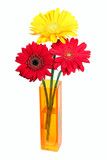 Daisy flower in yellow vase isolated on white
