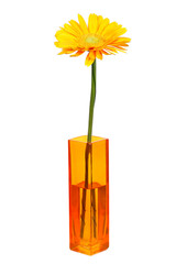 Yellow daisy flower in yellow vase isolated on white