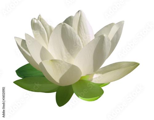Fotobehang Lotusbloem Fleur lotus
