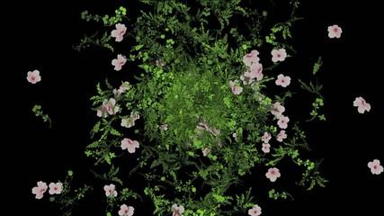 Floral backgroun black