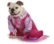 bulldog cowgirl