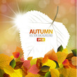 Vector autumn background with a card