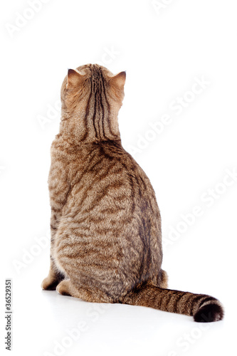 rear view of cat