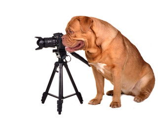 Dog photographer with camera