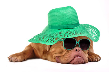 Funny dog with hat and glasses