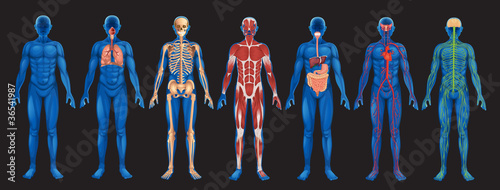 Human Body Systems - 36541987