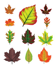 Autumn leaf vector set