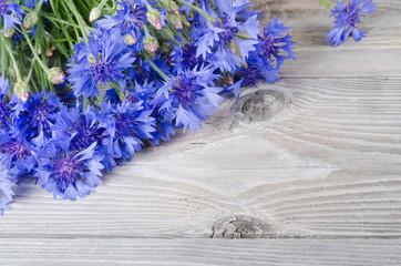 Beautiful blue cornflower