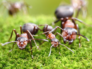 ants always mean family relations