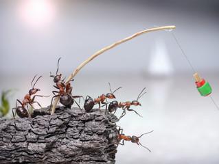 team of anglers  ants fishing at sea, teamwork