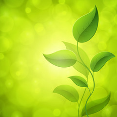 Green leaves with light. Vector background