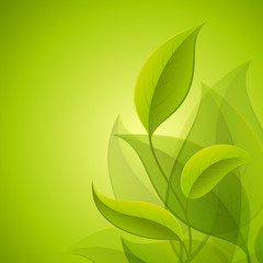 Green leaves. Vector background