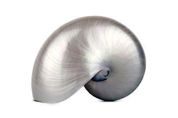 Pearly Nautilus Sea Shell upright