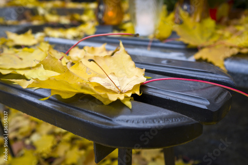 Detail of yellow autumn leaf