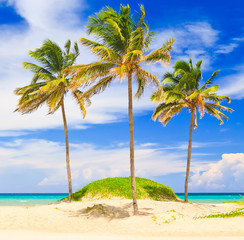 Coconut trees in the beautiful beach of Varadero in Cuba