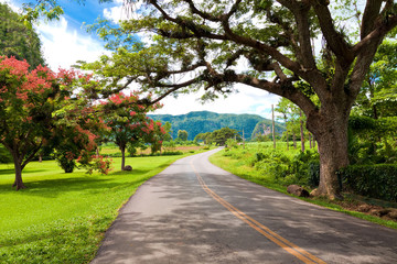 The Viñales valley in Cuba, a famous tourist destination
