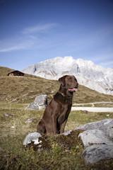 Jagdhund im Gebirge