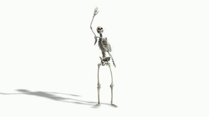 Skelett grüßt