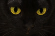 Asian Katze 18921a