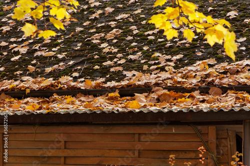 Herbstlaub verstopft die Dachrinne