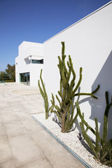Cacti growing outside modern house