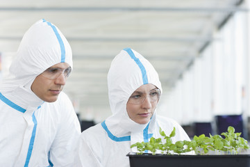 Scientists in protective suits examining plants in greenhouse