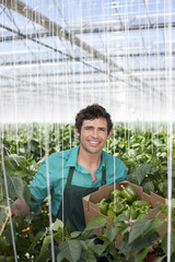 Man picking produce in greenhouse