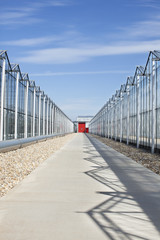 Concrete walkway between greenhouses