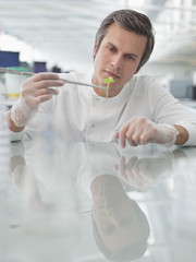 Scientist examining plants in lab