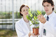 Scientists examining potted plant outdoors