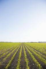 field against blue sky