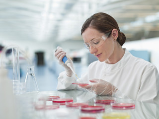 Scientist putting liquid in petri dishes in lab