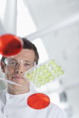 Scientist examining petri dishes in lab