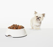 Dog examining bowl of dog food