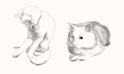 Cats blac&white