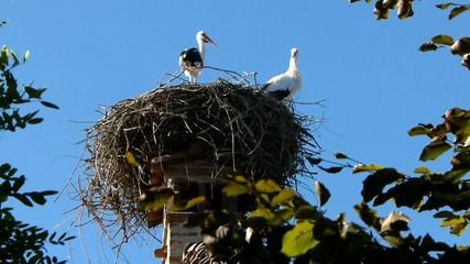 Cicogne nel nido 3