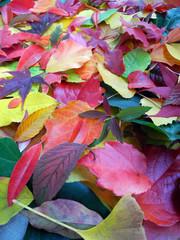 Buntes Herbstlaub Hochformat