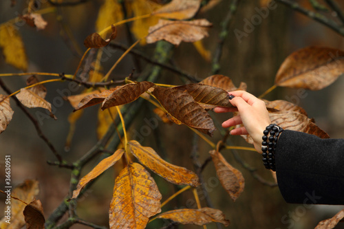 foglie di noce secche in autunno