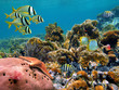 Tropical underwater marine in a thriving coral reef of the Caribbean sea - 36640539