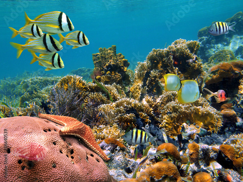 Fotobehang Koraalriffen Underwater