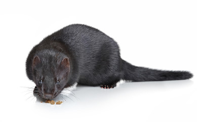 Black mink on white background