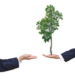 Transplant of a tree in male and female hands poster