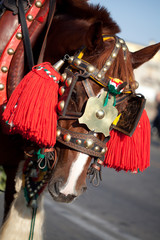 cavallo addobbato per la sagra