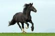 Fototapeten,pferd,pferd,reitend,reiter
