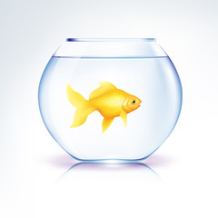 Gold Fish in a bowl