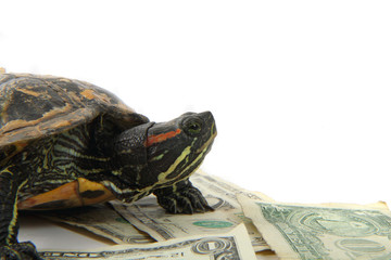 water turtle and money