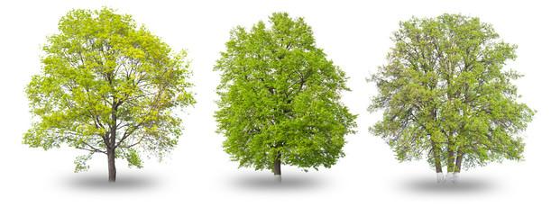Three green tree