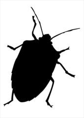 Cimice - Bug